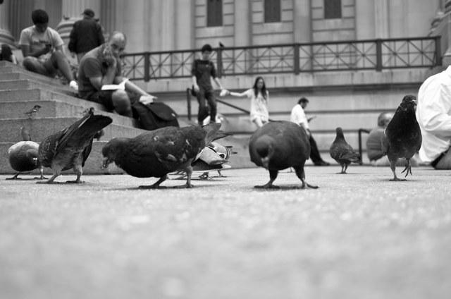 Pigeons outside the Met