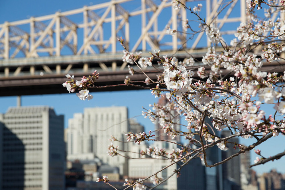 Spring at the Queensboro